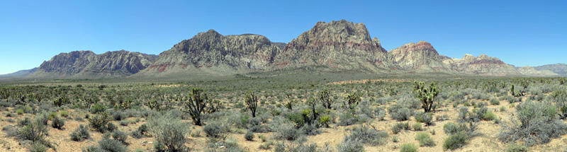 Red Rock Canyon and Joshua Trees